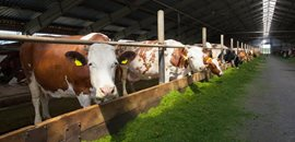 Livestock Breeding (Manure Treatment)